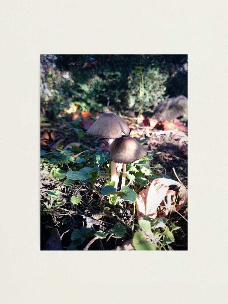 Alternative Ansicht von Kleiner Pilz im Garten Fotodruck