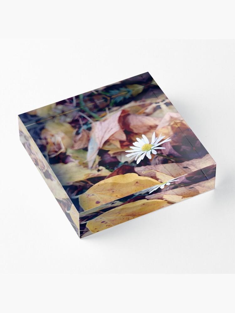 Alternative Ansicht von Gänseblümchen im Herbst Acrylblock