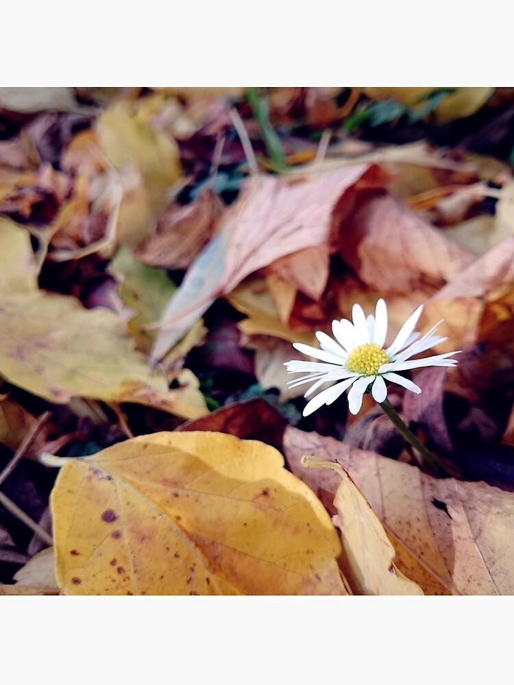 Gänseblümchen im Herbst von Gourmetkater