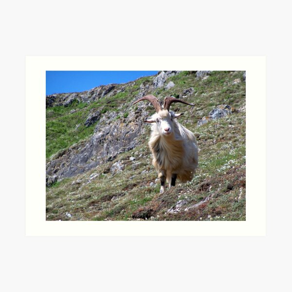 Mountain Goat Art Print