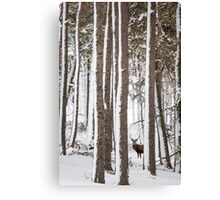 Winter Forest Stag  Canvas Print
