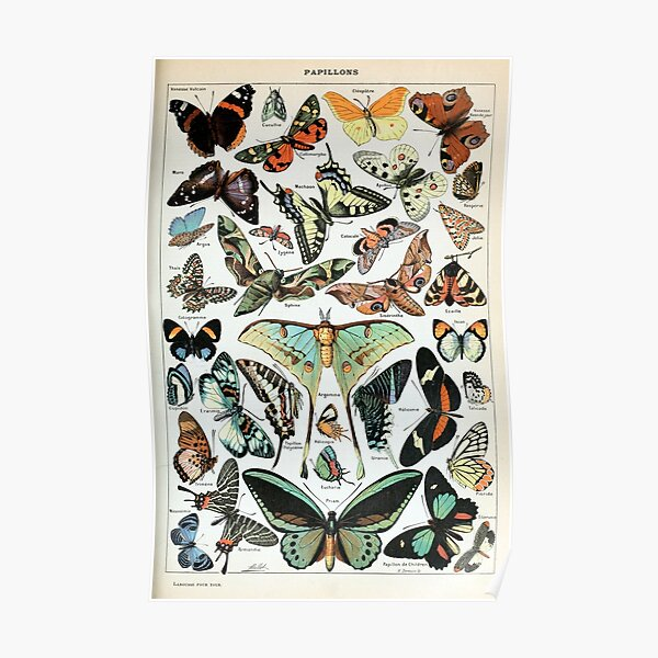 Vintage Butterflies of the World Poster