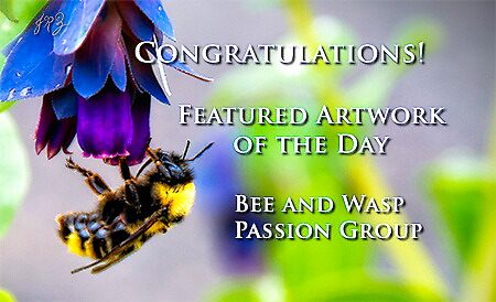Bee&Wasp Feature Banner Challenge Entry by James Zickmantel