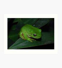 Green Tree Frog Art Print