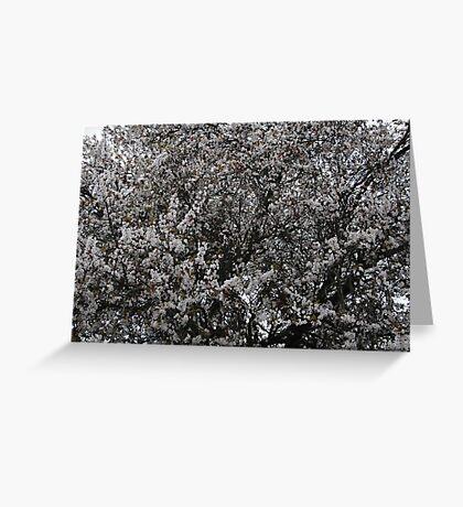 White Blooming  Tree Greeting Card