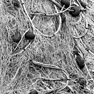 Fisherman netting 2 by DanielVijoi