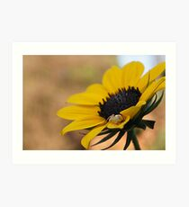 Spider waiting for lunch in a flower Art Print