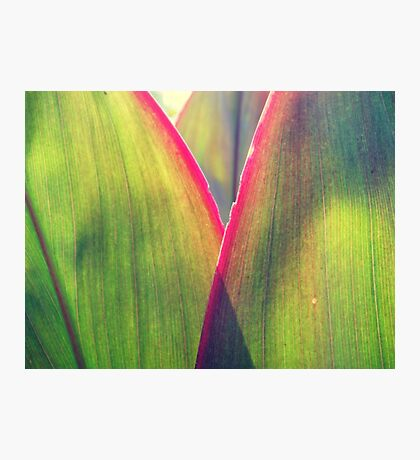 Color in leaves Photographic Print