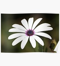 White flower 2796 Poster