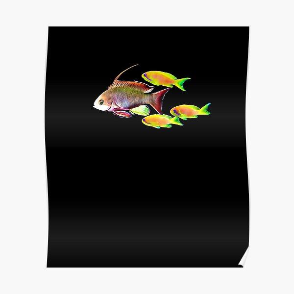 Lyretail Anthia Reef Fish Poster