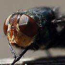 fly by paulinea