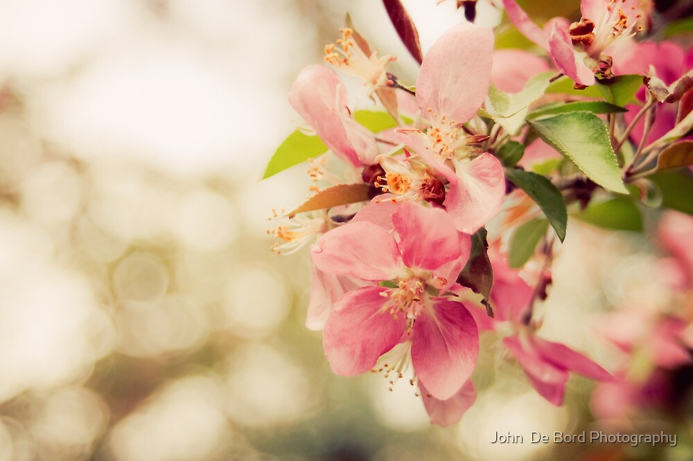 Spring Blossoms by John  De Bord Photography