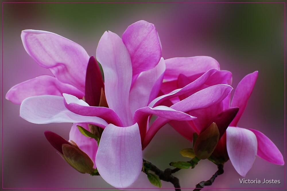 Saucer Magnolia by Victoria Jostes