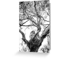 Tawney Frogmouth & Chicks Greeting Card