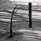 Sticks in Shadows by Kofoed