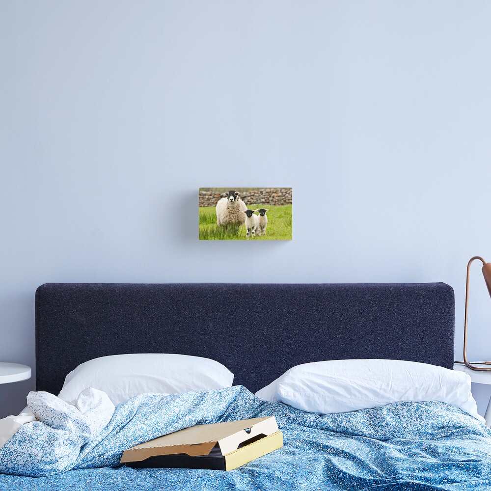 Sheep with lambs Canvas Print