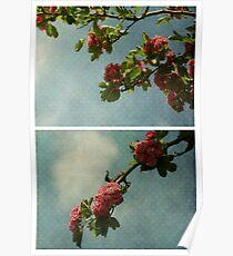 Spring - Pink Hawthorn Poster
