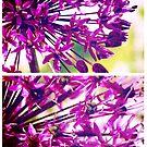 Spring Allium by Sybille Sterk