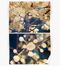 Spring - Viburnum Grandiflora Poster