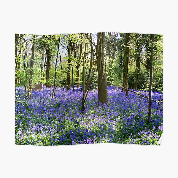 Bluebell Delight Poster