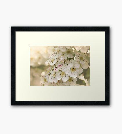 The Sweet Days of Spring Framed Print