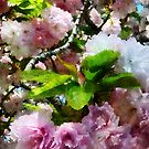Double Cherry Blossoms by Susan Savad
