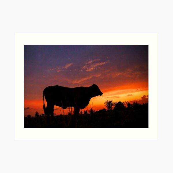 Droughtmaster Sky Art Print