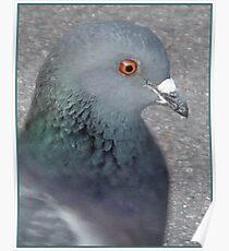 Painterly Portrait of a Dove Poster