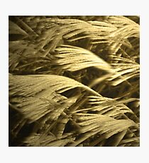 Prarie Grass Photographic Print
