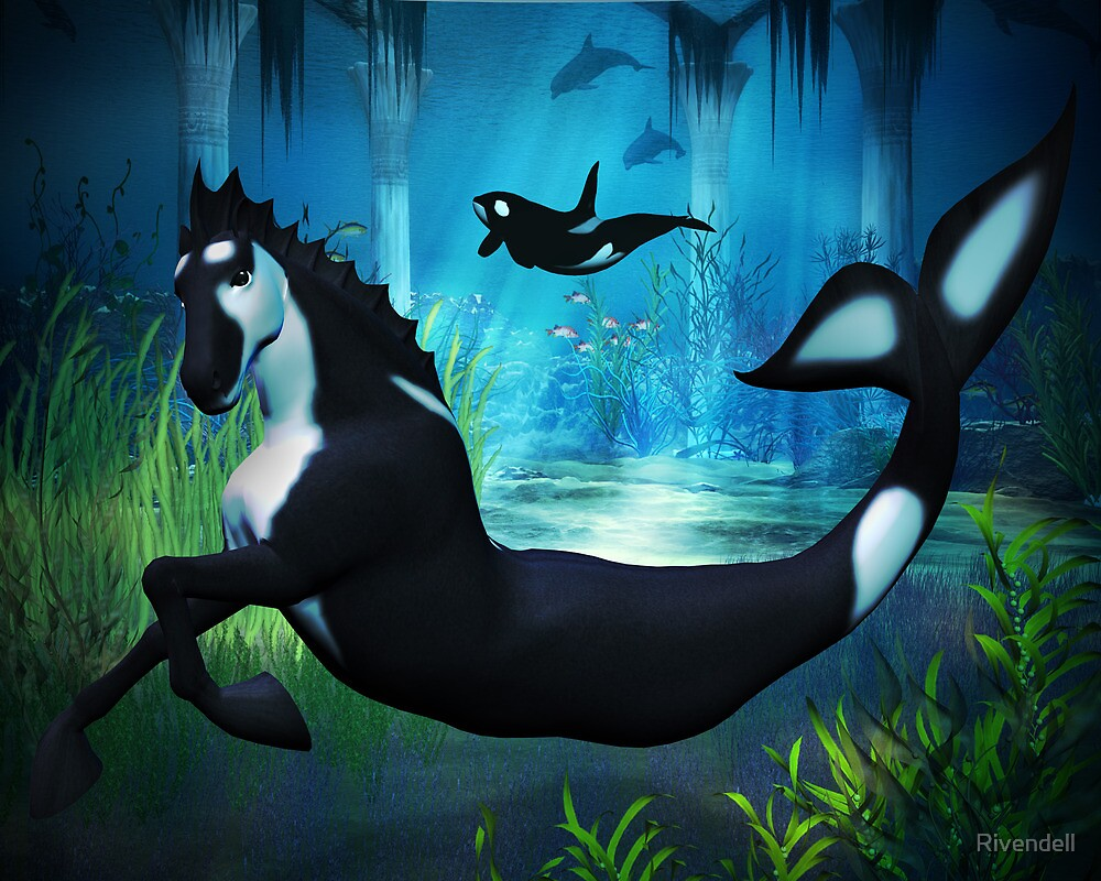 Quot Killer Whale Sea Horse Quot By Rivendell Redbubble