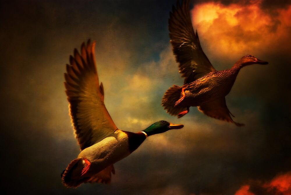 Flying Ducks by ajgosling