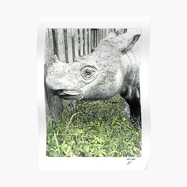 Sumatran Rhinoceros Poster