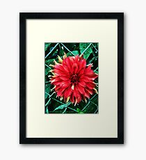 Unfettered Framed Print