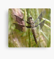 Black dragonfly Metal Print