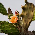 Cactus in Bloom - Jalisco, Mexico by Lynnette Peizer