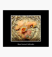 Feed me! (Baby Robins) Photographic Print