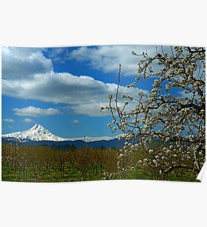 Fruit Loop Landscape Poster