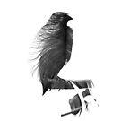 Bird Feather by FakeFate