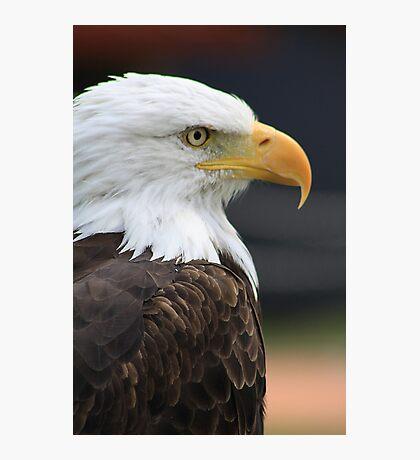 "Bald Eagle - ""Jefferson"" Photographic Print"