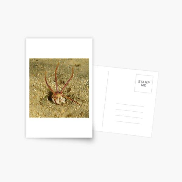 Predatory Polychaete Postcard
