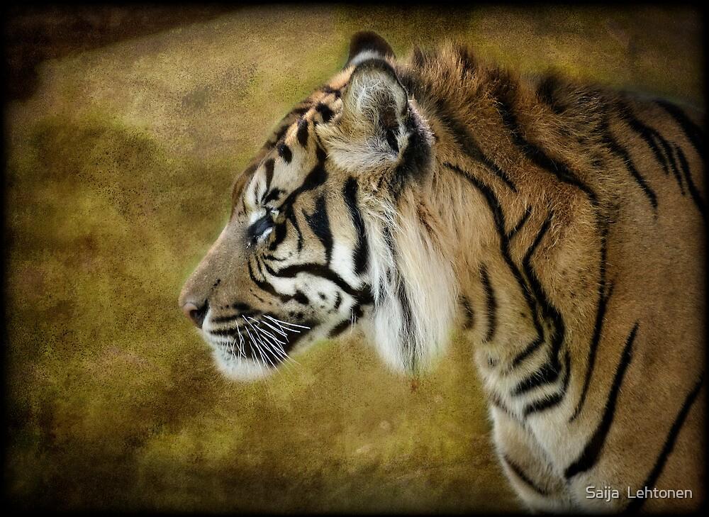 Portrait of a Tiger  by Saija  Lehtonen