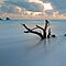Driftwood/Dead Trees found along Our Shores