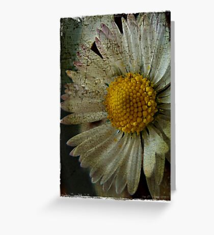 Floral Decay # 3 Greeting Card
