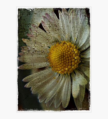 Floral Decay # 3 Photographic Print