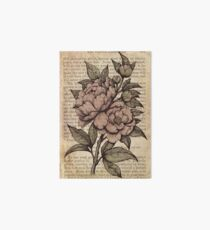 Botanicals - Peonies vintage Art Board Print