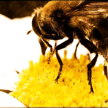 Beeful by jep983