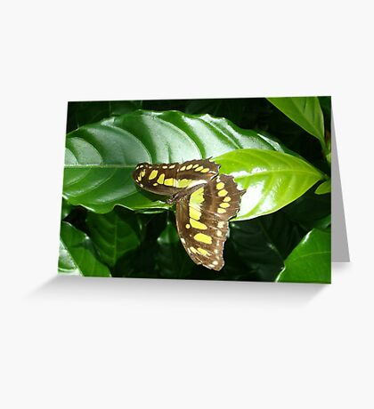 The Green Malachite Butterfly  Greeting Card