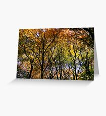Tree Canopy, Ness Woods. Greeting Card