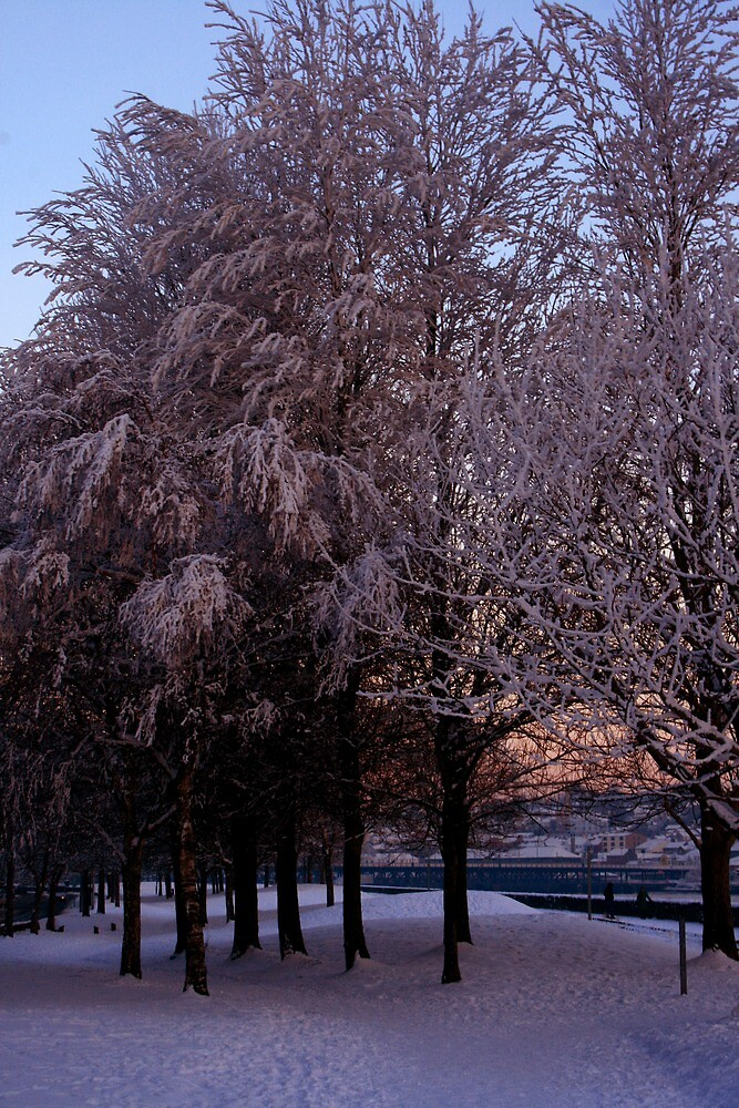 Winter by the Foyle by Ciaran Sidwell