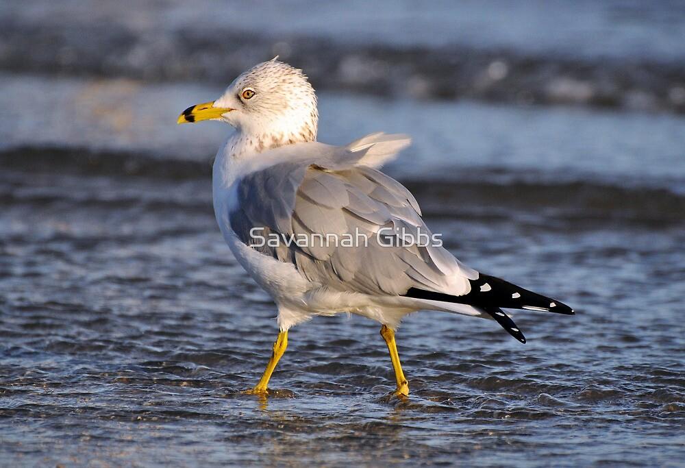 Seagull  by Savannah Gibbs